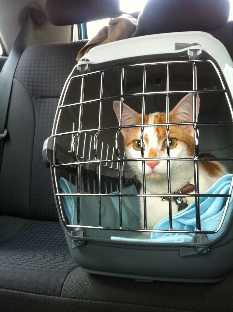 Katten transport