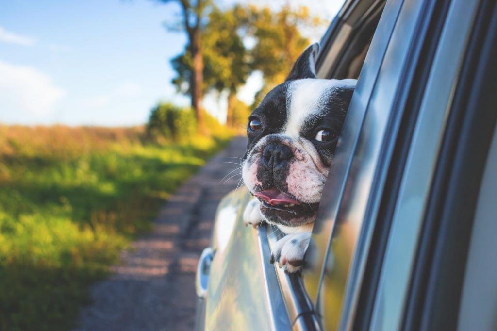 Honden vervoeren